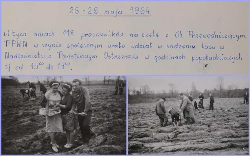 26-28 maja 1964 roku. Sadzenie lasu w czynie społecznym. Z kroniki Z.Z.P.P.i S...., stare zdjęcia -