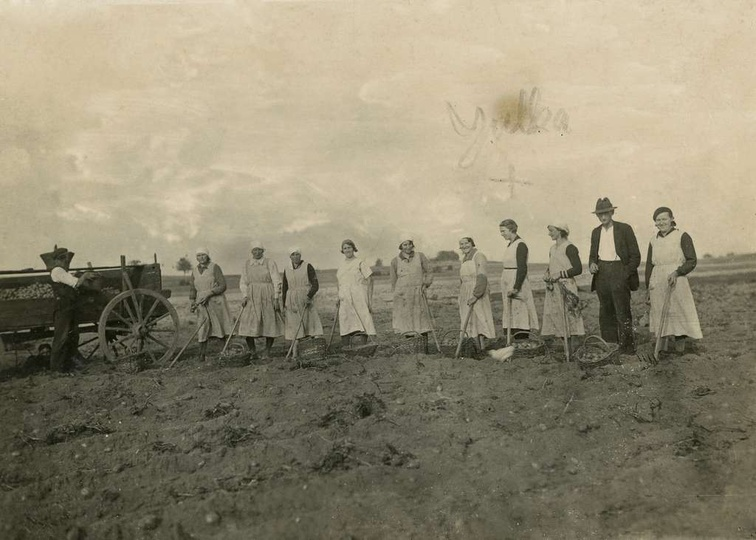 """Zdjęcia podpisane  """"Kopiemy ziemniaki u Gorgolewskiego."""" Zaznaczona krzyżykiem..., stare zdjęcia -"""