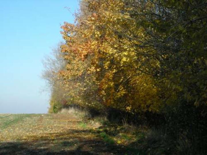 Szkolka drzew i krzewow Rojow, stare zdjęcia -