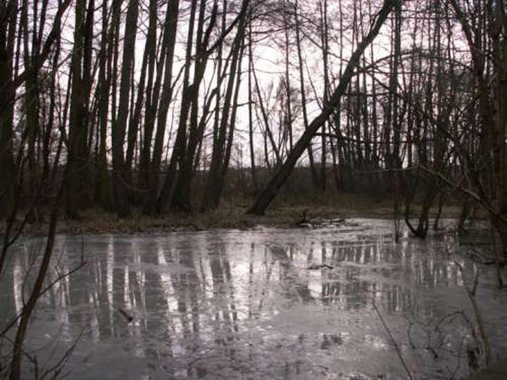 Zbiornik przy młynie Radke - dziś bagnisty, podmokły teren., stare zdjęcia -