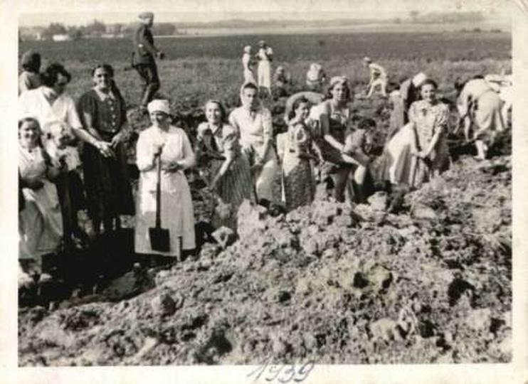 Członkinie ostrzeszowskich organizacji kobiecych przy kopaniu rowów przeciwczołg..., stare zdjęcia -
