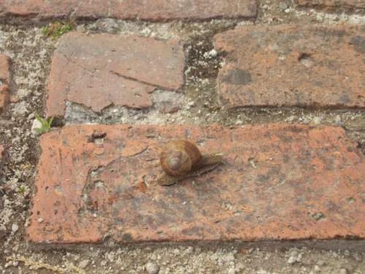 Ślimak na Baszcie, stare zdjęcia -